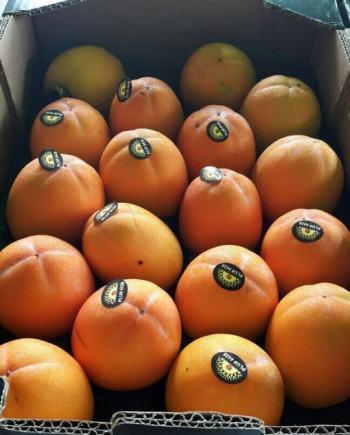 Hồng giòn Tây Ban Nha - Vinfruits.com