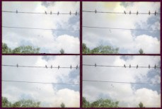birds wire sampler