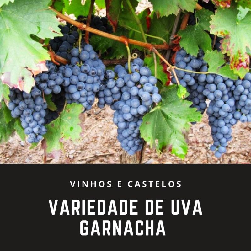 Variedade de uva: Garnacha