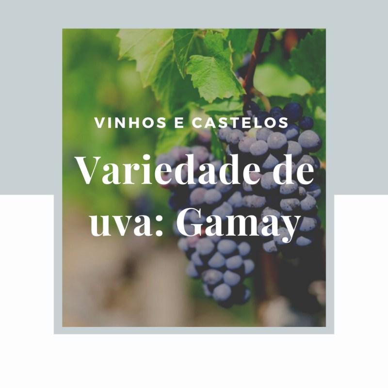 Variedade de uva: Gamay e sua leveza
