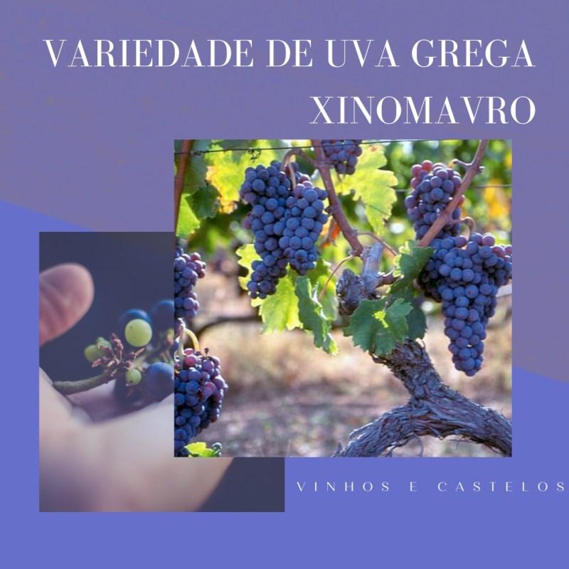 Variedade de uva grega: Xinomavro