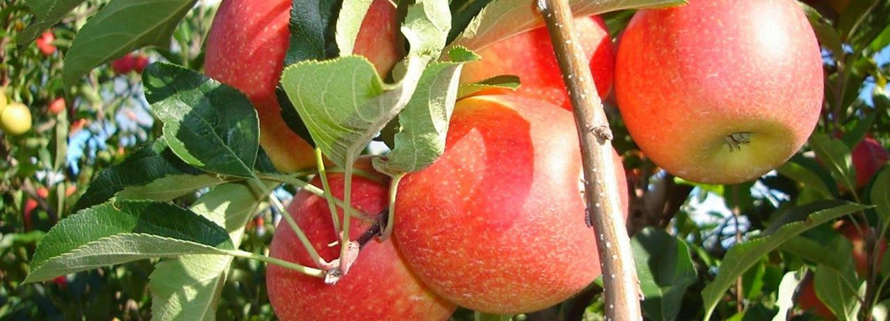 Read more about the article Farmers apple Juice