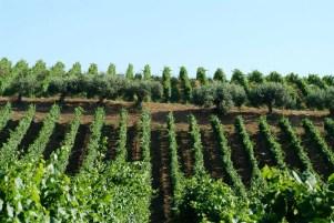 Azienda agricola Geraci
