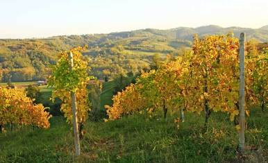 The Pusterla vineyards in Val d'Arda
