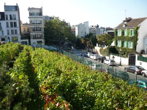 Vigne_de_Montmartre