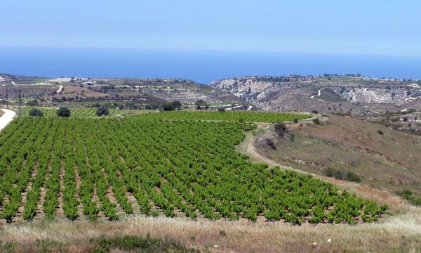 Chipre opta por las variedades autóctonas con éxito