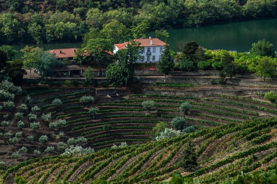 Symington Family Estates, The Douro Valley, Portugal. (Pic: Sotheby's)