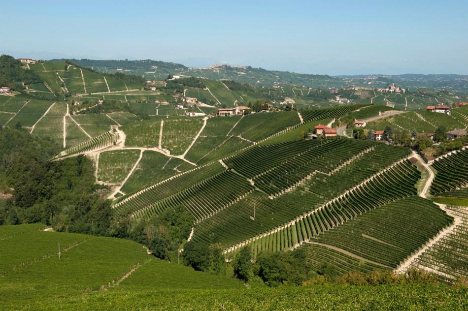 Ornato, the most treasured single vineyard site in Serralunga for Pio Cesare (pic: Pio Cesare)