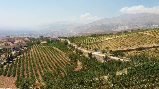 Виноградники в Долине Бекаа