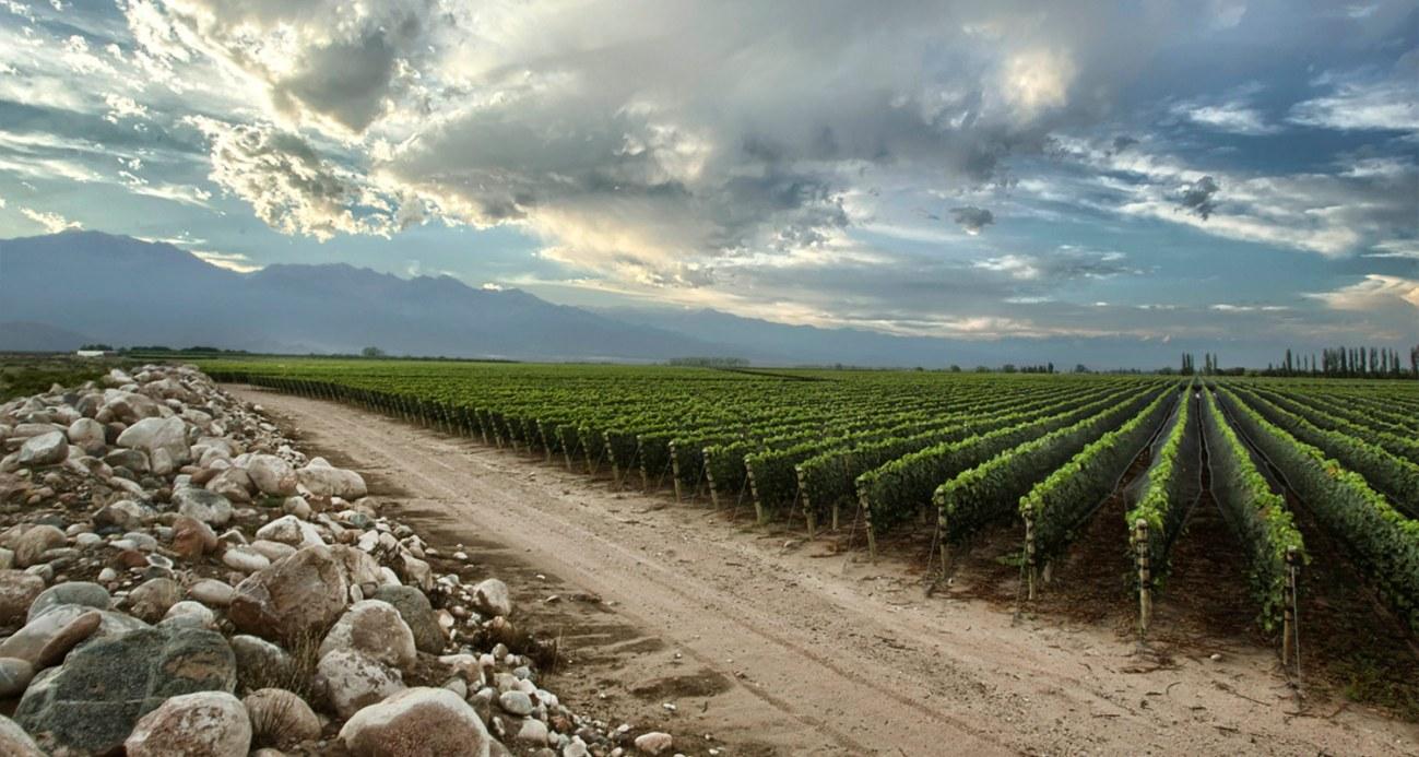 Винодельня Зуккарди Аргентина долина Уко лучшие виноградники винодельни мира