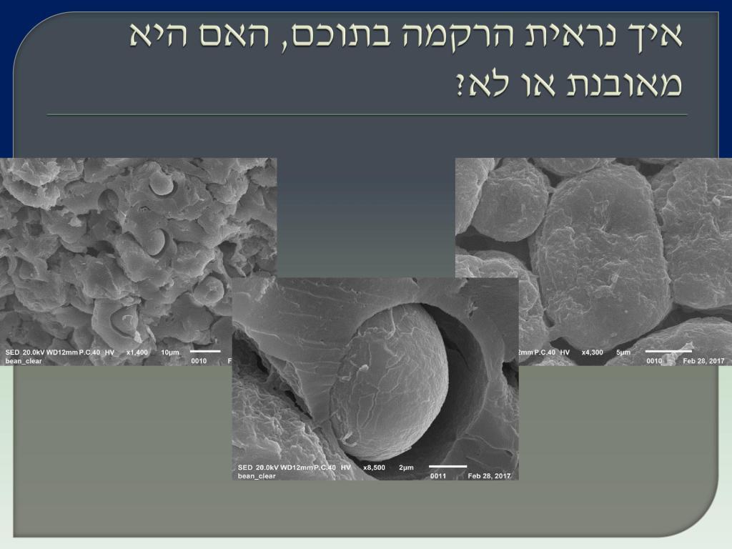 Виноград Израиля 2