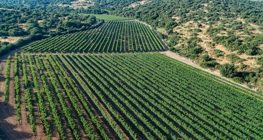 виноградники Сфера
