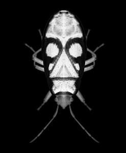avatar-olivier-garcia