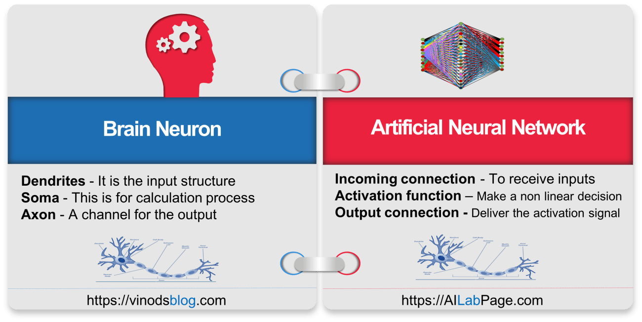 Brain Neuron vs ANN