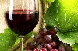Terre di Cosenza ospita il Siaft Wine 2013 a Capo Bonifati