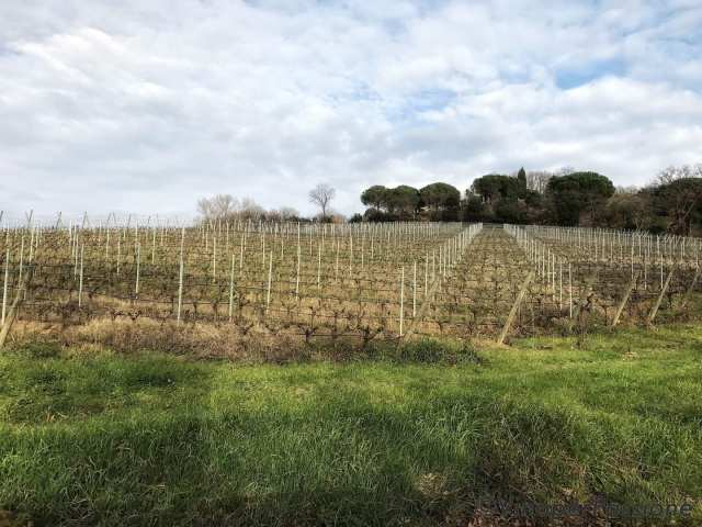 Ot wine Toscana