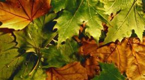 Las hojas (2)