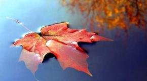 Las hojas (1)