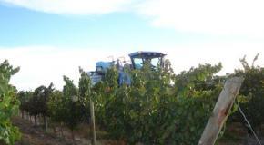 Región vinícola Mendoza (Argentina)
