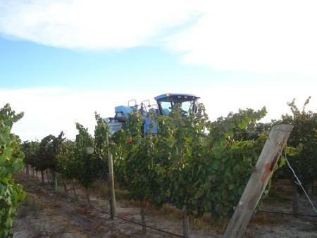 Labrando el viñedo