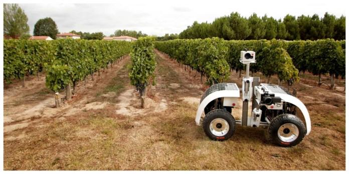vinerobot robot viñedo