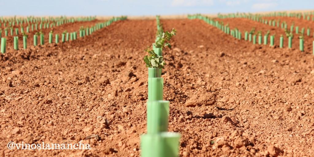 Estas son las nuevas hectareas de viñedo concedidas para 2018