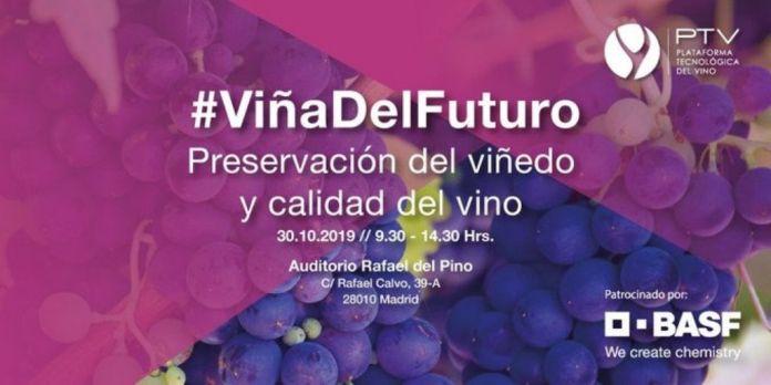 preservacion viñedo y calidad del vino