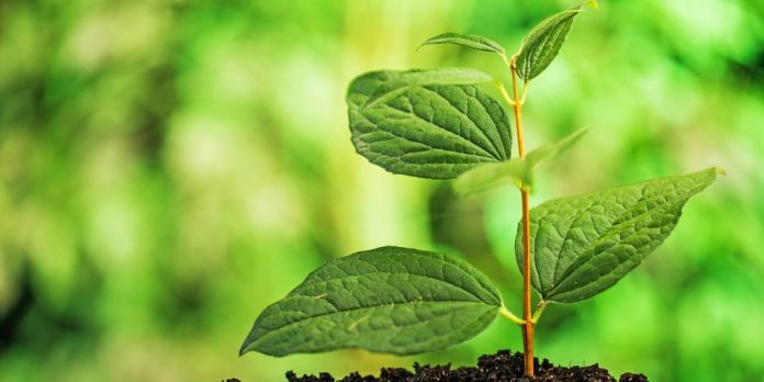 datos agricultura ecológica españa