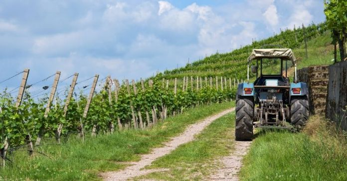 medidas sector vitivinicola covid19