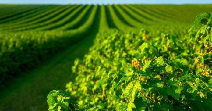 superficie producción ecologica en españa 2019 2020