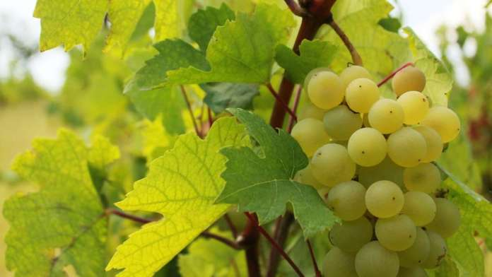 declaracion ambiental de producto vinos