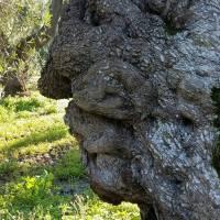 Olio extra vergine Tenute Parco piccolo: tradizione e innovazione