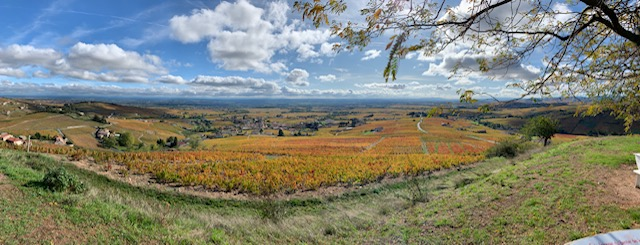 Panoramic photo of Beaujolais Cru vineyards in France, before the pandemic, in October 2019