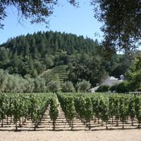 Miravalle and La Perla Vineyards