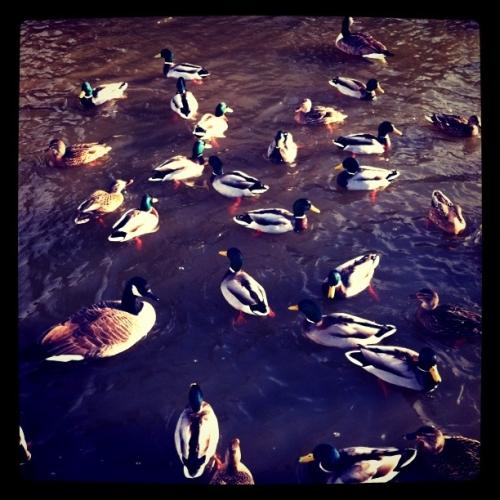 看到河里的鸭子就想到烤鸭
