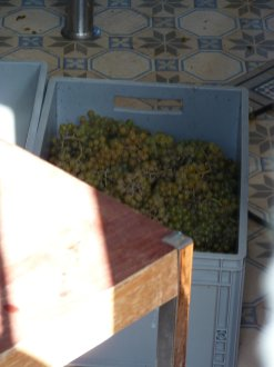 190921_Vendanges_PJourez_12