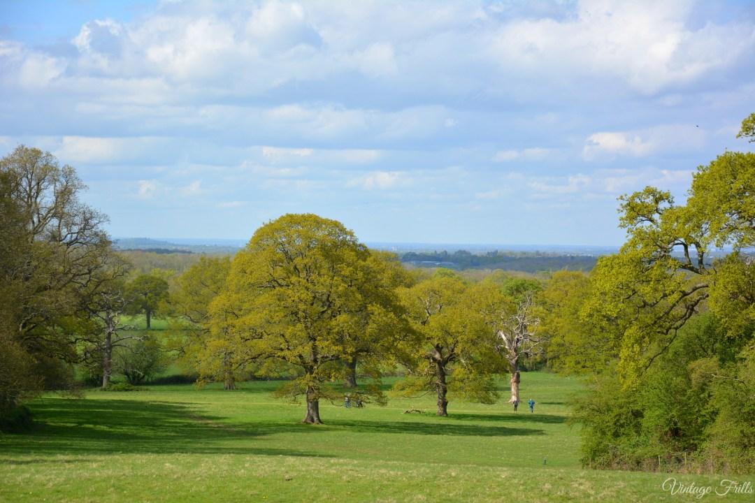 Hatchlands Park View