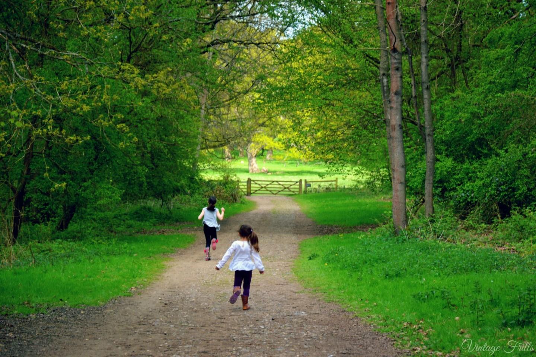Hatchlands Parks Woods