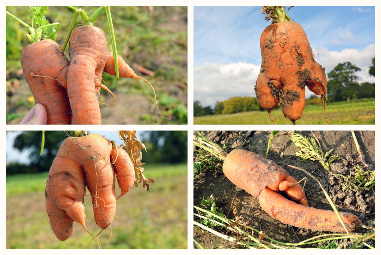 Ugly Carrots
