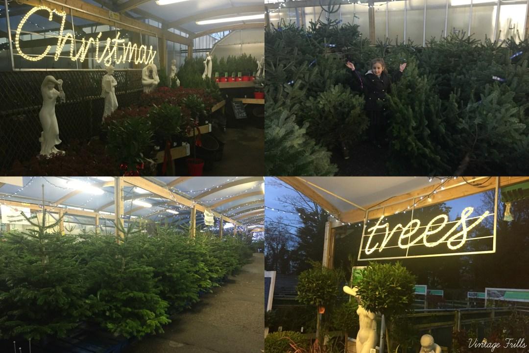 choosing-a-christmas-tree