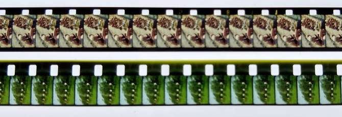 Super 8 and Standard 8 film