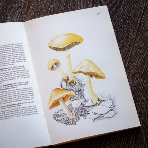 Грибы. Иллюстрация из книги 1979 года. Артикул: mat023