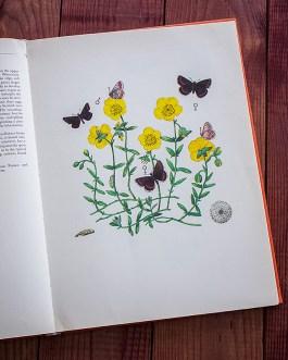 Бабочки. Иллюстрация из книги 1968 года. Артикул: tcbbic_pl034