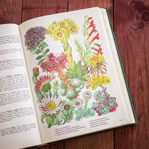 Садовые растения. Иллюстрация из книги 1960 года. Артикул: tibogf046