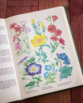 Садовые растения. Иллюстрация из книги 1960 года. Артикул: tibogf067