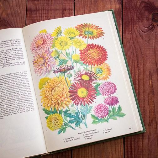 Садовые растения. Иллюстрация из книги 1960 года. Артикул: tibogf091