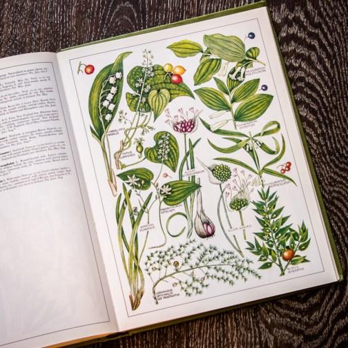 Растения Британии. Иллюстрация из книги 1982 года. Артикул: tncbf084