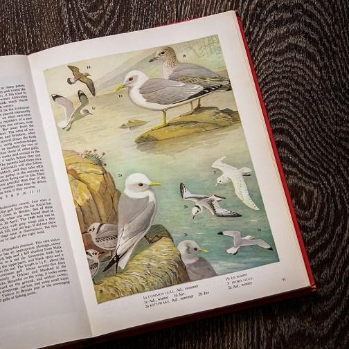 Птицы. Иллюстрация из книги 1973 года. Артикул: tobob046