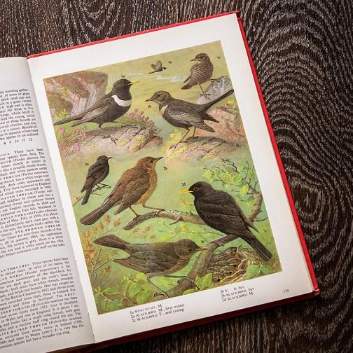 Птицы. Иллюстрация из книги 1973 года. Артикул: tobob070