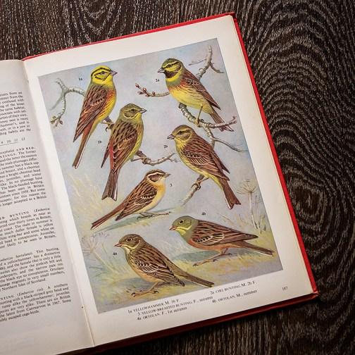Птицы. Иллюстрация из книги 1973 года. Артикул: tobob094